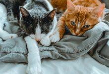 A quarentena e vivendo como gatos-temacapa-mileniostadium