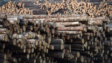 WTO decision on softwood lumber cheered by Canadian producers, denounced in U.S.-Milenio Stadium-Canada