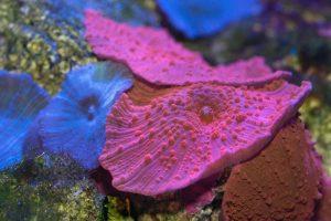 Metade dos corais da Grande-austrália-mileniostadium