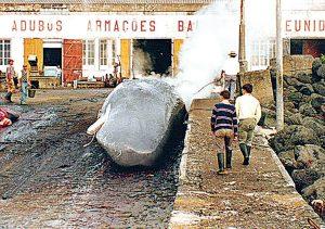 Baleia À Vista!-azores-mileniostadium