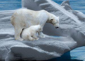 Sapiens ou exterminator-antartic-mileniostadium