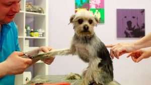 Ontario changes rules allowing pet groomers to open under restrictions-Milenio Stadium-Ontario