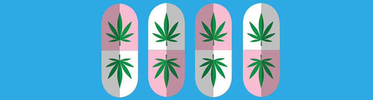 milenio stadium - voxpop - cannabis