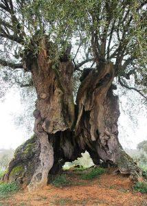A poesia das árvores-mundo-mileniostadium