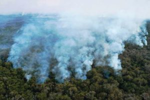 Destruição de florestas tropicais aumentou 12%-brasil-mileniostadium