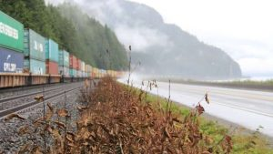 CN Rail fined $100K for spraying herbicide on tracks without clearance, damaging vegetation-Milenio Stadium-Canada