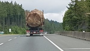 Photo of massive tree being hauled down Vancouver Island highway sparks global outrage-Milenio Stadium-Canada