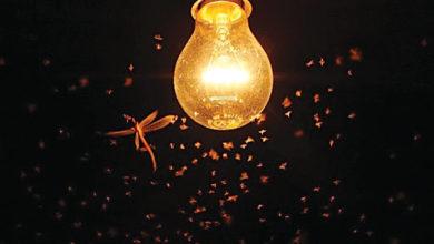 Poluição Luminosa-ambiente-mileniostadium