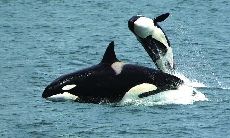 Terra Viva Orcas-ambiente-mileniostadium