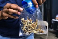 Health Canada dragging feet on approving magic mushrooms for therapeutic use, patients and advocates say-Milenio Stadium-Canada