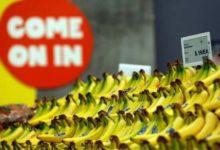 Bananas at Whole Foods-Milenio Stadium-Canada