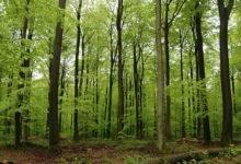 Salvar a Floresta Portuguesa-portugal-mileniostadium