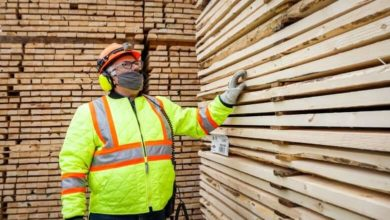 Lumber crash leads to 'blowout' sales as prices crater-Milenio Stadium-Canada