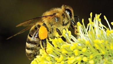 A importância das abelhas-ambiente-mileniostadium