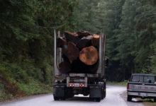 Proposed changes to forestry policy 'only a start,' B.C. Forest Practices Board chair says-Milenio Stadium-Canada